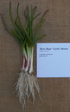 Rare_ripe_garlic_shoots