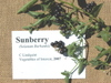 Larger_sunberry
