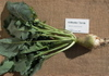 Gilfeather_turnip